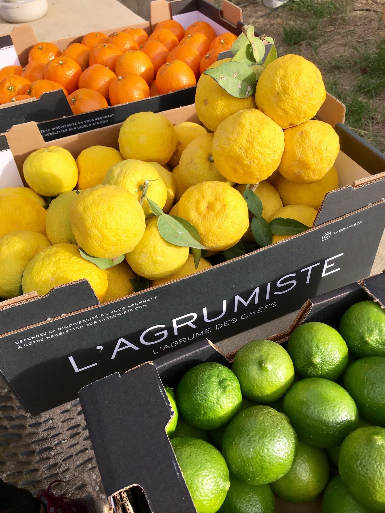 L'AGRUMISTE, LE JARDIN EXTRAORDINAIRE DE LAURENT BOUGHABA –MAROC